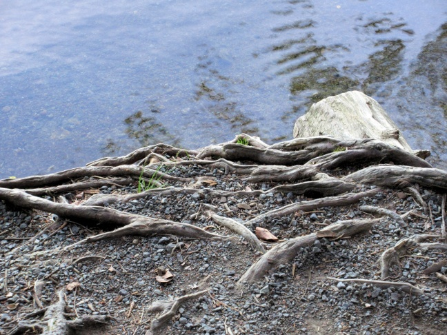 roots near water