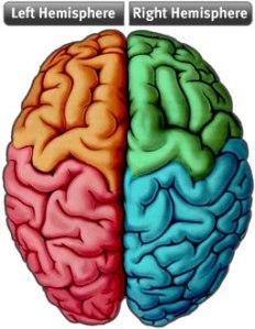 brain-hemispheres